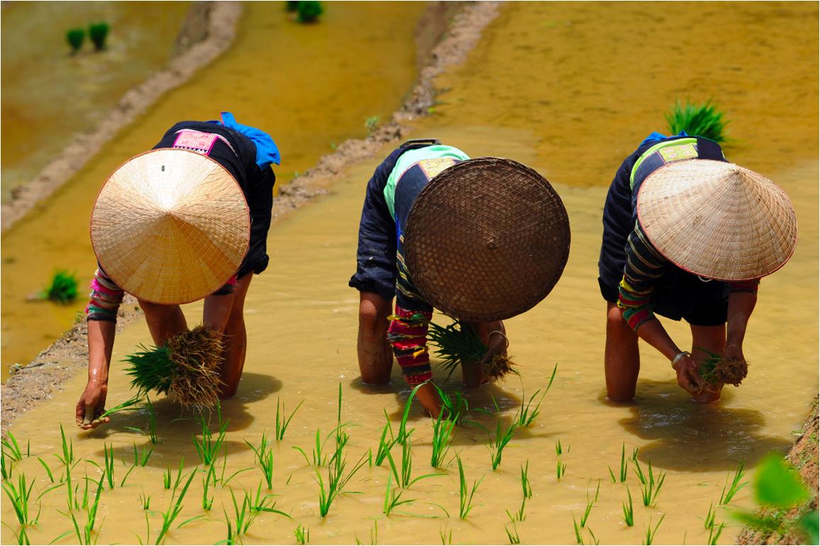 Plantation de riz chez les lolo noirs, région de Cao Bang, Vietnam, 2015 © Jean-Michel Turpin« Malgré les avancées technologiques, il reste des tâches basiques – ici, planter du riz – que seuls des femmes et des hommes peuvent accomplir. L'objectif est de se battre et de créer les conditions pour un travail décent, avec des rémunérations à la hauteur, des horaires à respecter, etc., car c'est dans le domaine des travaux manuels que le travail décent est le moins respecté dans le monde. »